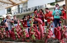Oaxaca el arte de la cultura