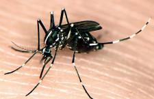 Autoridades y ciudadanos juntos en la prevención y combate de la fiebre Chikungunya