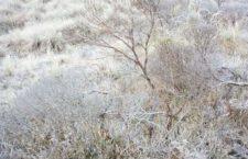 Se mantendrán bajas temperaturas y Evento Norte en Oaxaca: CEPCO