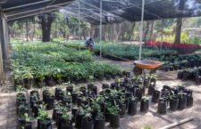 Contribuye Administración al fomento de la cultura ambiental