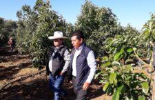 Trabajarán coordinadamente Sedapa y Sader en programas federales que beneficien al campo oaxaqueño