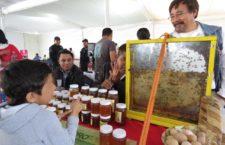 Ocupa Oaxaca 5º lugar nacional en producción de miel