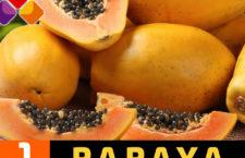 Oaxaca, principal productor de papaya maradol