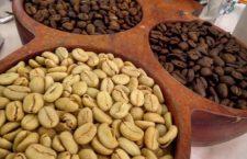 Oaxaca, líder en producción nacional de café