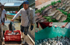 Da Sedapa total respaldo a sector pesquero de Oaxaca