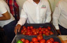 Fortalecerá Oaxaca mercado interno y nacional para hacer frente a arancel impuesto por EU a exportación de jitomate