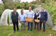 Cosecha en macrotúneles del Ayuntamiento, paso a la autosuficiencia alimentaria: Oswaldo García