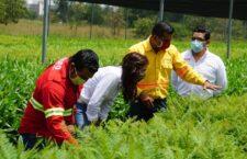 Se suma Yarith Tannos a la campaña Estatal de Reforestación 2020, impulsada por el gobernador Alejandro Murat