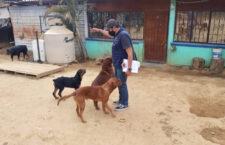Atendió Ayuntamiento de Oaxaca de Juárez 229 denuncias de maltrato animal en 12 meses